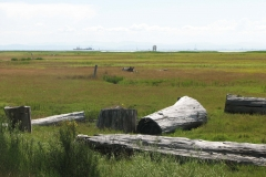 Looking from Richmond's West Dyke Trail toward Vancouver Island